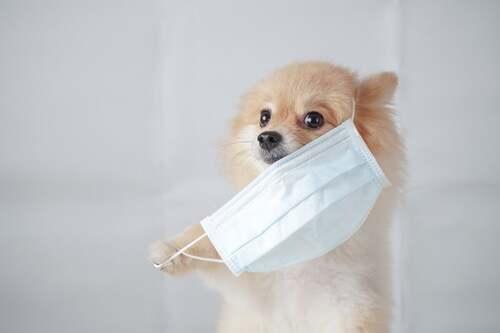 Cane con la mascherina.