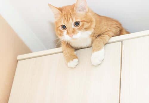 Misure preventive per proteggere il gatto dai veleni.