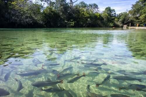 Osmoregolazione nei pesci d'acqua dolce.