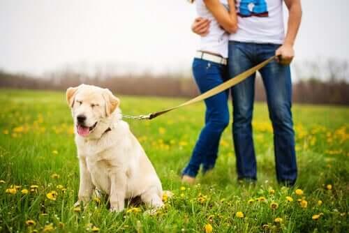 Benefici delle passeggiate per i cani anziani.