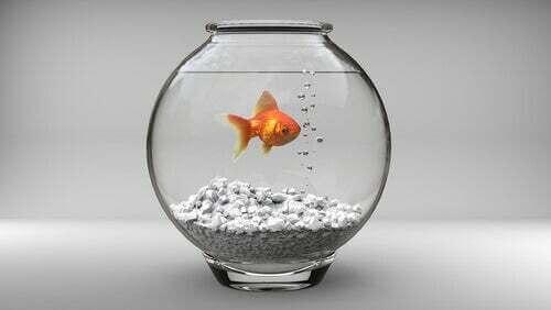 Pesce rosso in una boccia.