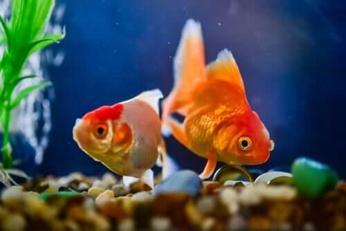 Pesci malati in un acquario.