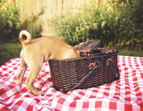 Consigli per organizzare un picnic per cani
