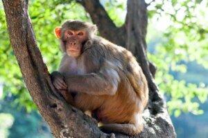 Tombe di animali: scoperta quella di una scimmia di 4.000 anni fa