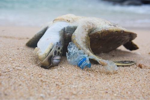 Tartaruga morta in spiaggia con bottiglia di plastica.