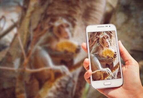 Perché non bisogna il video dello scimpanzé che usa il telefono?