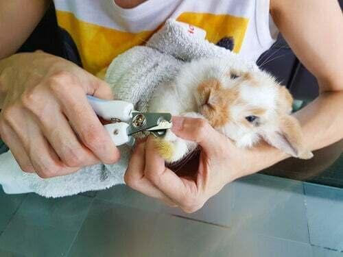 Come prendersi cura delle unghie del coniglio