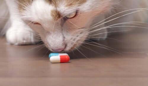 Come proteggere il gatto dalle intossicazioni domestiche