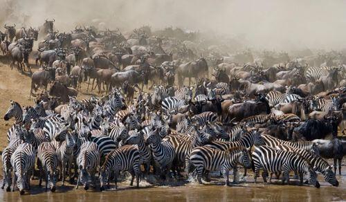 Animali migratori: quali sono e perché si spostano?