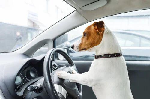 Trasportare un animale in auto: cosa dice la normativa?