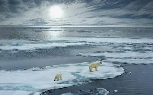 4 magnifici animali che abitano l'Artico