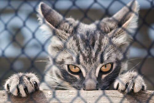 Gli artigli del gatto: a cosa servono e come prendersene cura