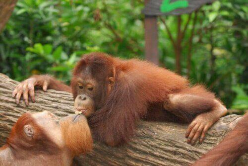 Nel regno animale esistono i baci? La risposta è sorprendente