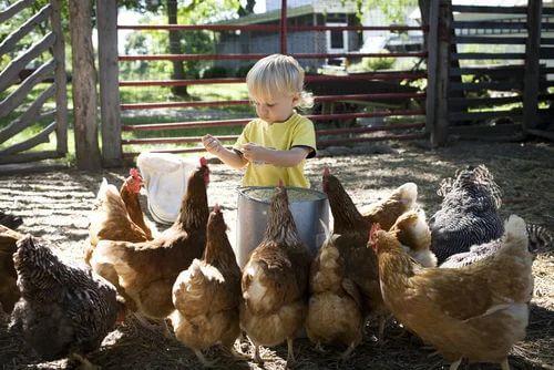 Bambina assieme alle galline.