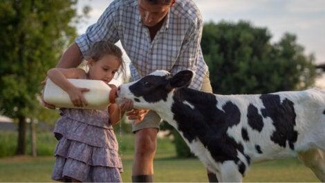 Bambina che offre del latte a una mucca.