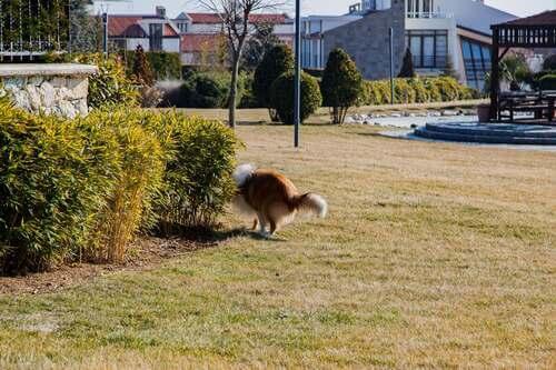 Cane dietro un cespuglio.