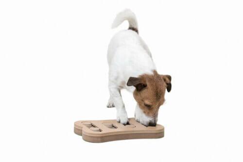 Stimolazione mentale nei cani: una questione di gioco