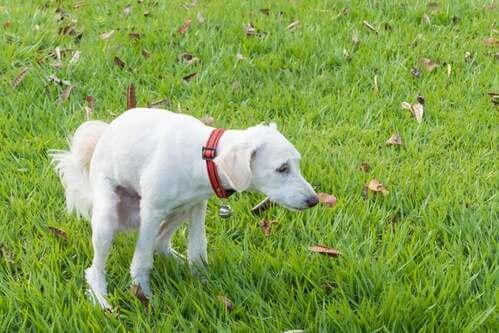 Cosa devono mangiare i cani con diarrea?
