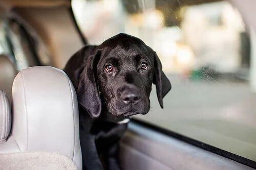 Trasportare un animale in auto.