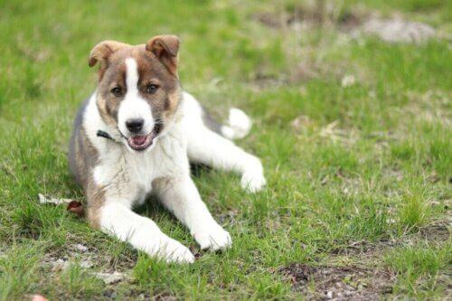 Il carattere del cane cambia con gli anni?