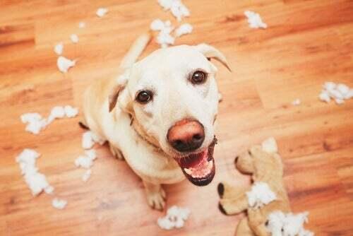 Memoria dei cani. Cane che guarda il padrone.