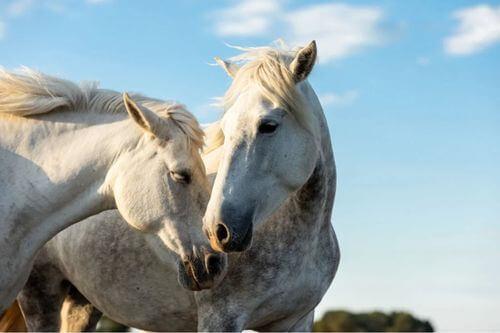 Due malattie equine che è importante conoscere
