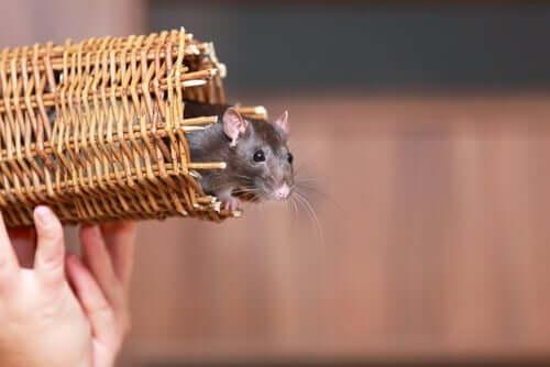 5 animali che possono vivere in un appartamento