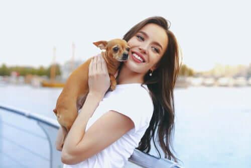 Cani toy: le cinque razze più popolari