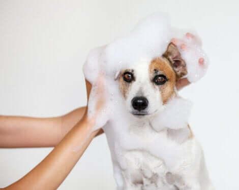 Lavaggio di un cane.