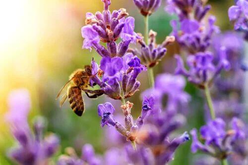 Quali sono i fiori che attirano di più le api?