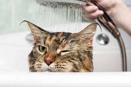 Gatto sotto la doccia.