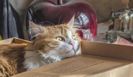 Cose che il gatto odia: felino durante un trasloco.