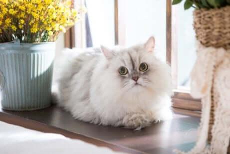 Nuovo gatto sul davanzale di casa.