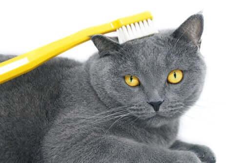 Spazzolare il pelo del gatto.