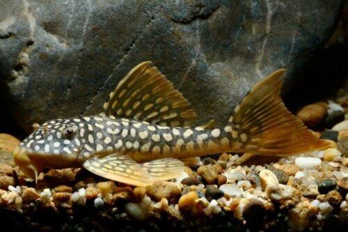 Scoprite i pulitori naturali per il vostro acquario