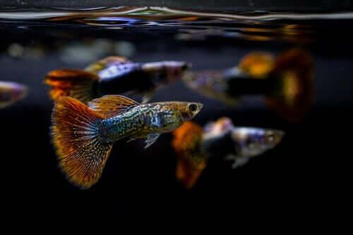 Pesci colorati.