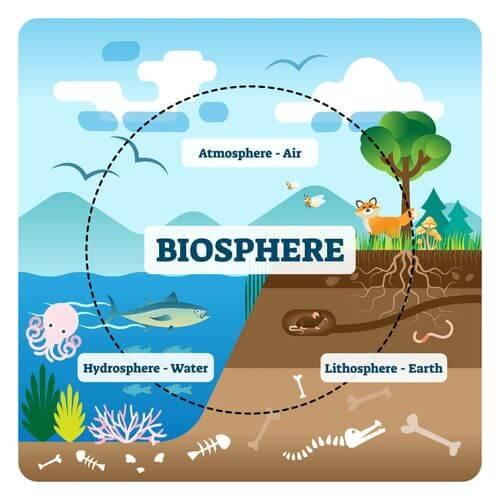 Schema del funzionamento di un ecosistema.
