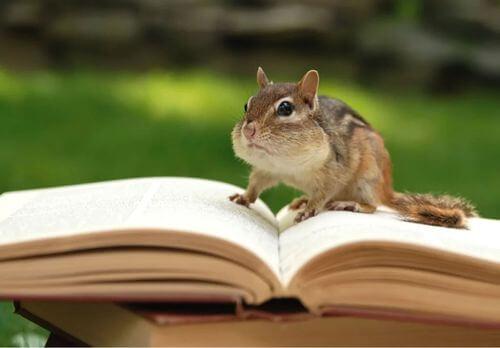 Libri di zoologia: eccone 9 che dovreste leggere