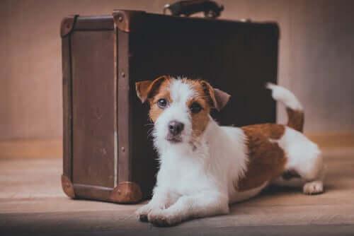 Traslocare con gli animali domestici: consigli utili