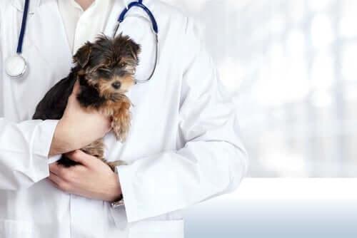 Veterinario che tiene in braccio un cucciolo.