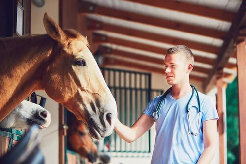 Malattie equine, veterinario visita un cavallo.