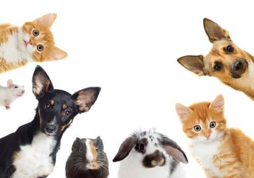 Come scegliere l'animale domestico adatto?
