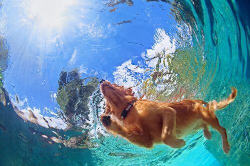 Cane che nuota visto dal basso.