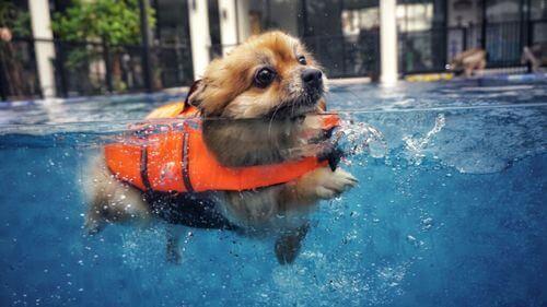 Nuotare con il cane: 5 consigli per garantire il divertimento