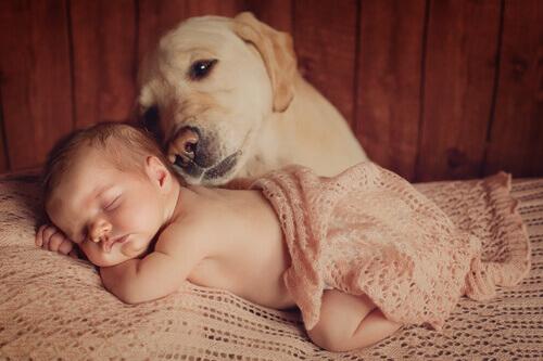 Cane e neonato insieme.