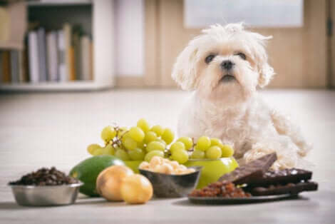 Importanza della vitamina E: cane con alimenti diversi.