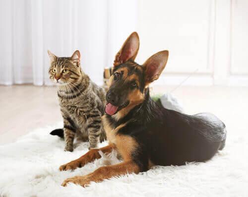 Cane e gatto sul tappeto.