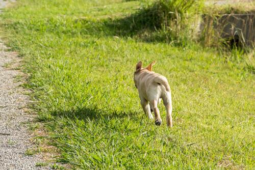 Come evitare che il cane scappi: ecco qualche consiglio
