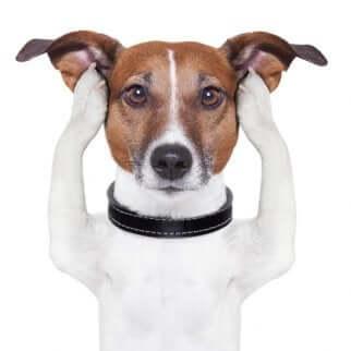 Cane sordo per la vecchiaia. Come prendersi cura degli animali anziani.