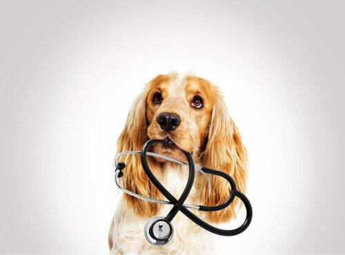 Effetti degli squilibri elettrolitici negli animali domestici